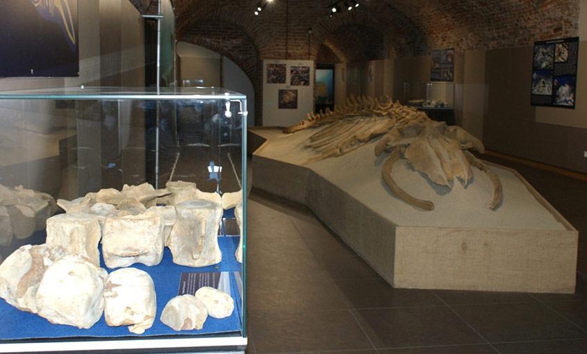 Nuovo Museo Paleontologico
