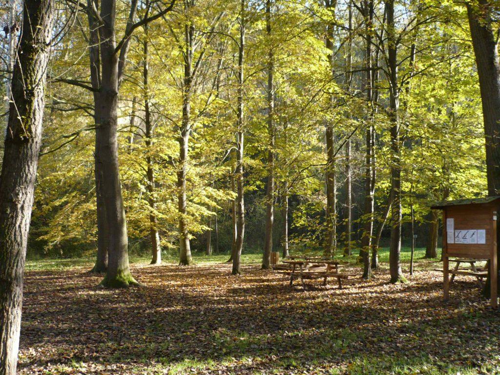 Designazione di un componente nel Consiglio del Parco per le  Associazioni Ambientaliste