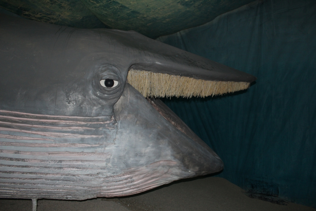 E' qui che aspetta i suoi amici (capodogli, delfini e altre balenottere come lei) per nuotare insieme