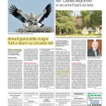 Cicogne-La-Stampa-14.06.2019