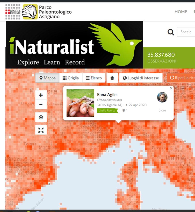 Citizen Science nell'Astigiano – anche tu naturalista con Parco Paleontologico e iNaturalist