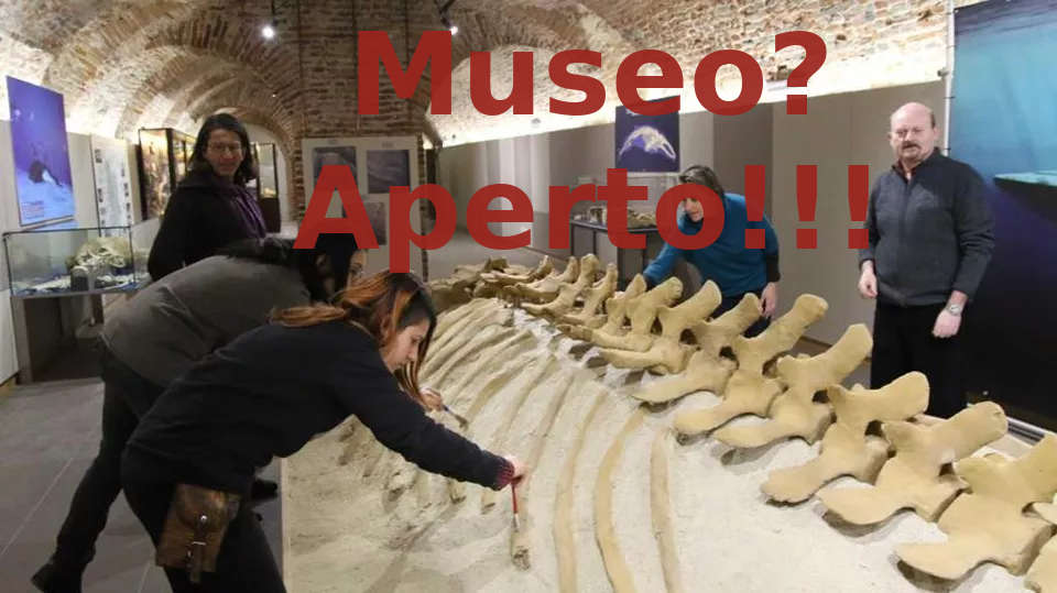 Il Museo dei fossili riapre lunedì: date, orari e regole da osservare!